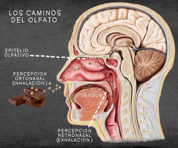 Neurogastronomía: el sabor olfativo