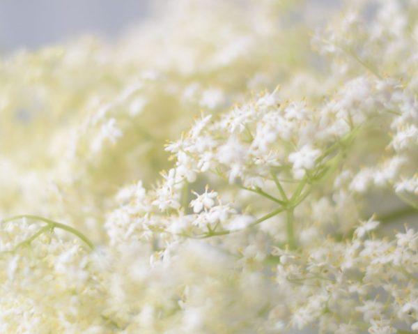 Entrenamiento olfativo en hiposmia y anosmia