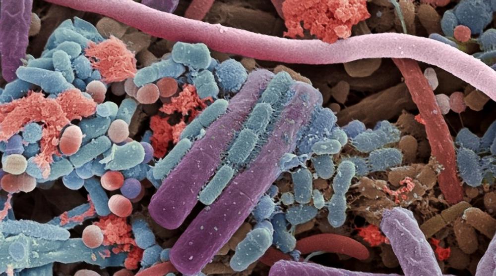 Microbiota Intestinal: Guía de Actualización